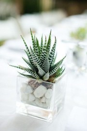 Cool Small Cactus Ideas For Interior Home Design03
