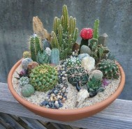 Cool Small Cactus Ideas For Interior Home Design06
