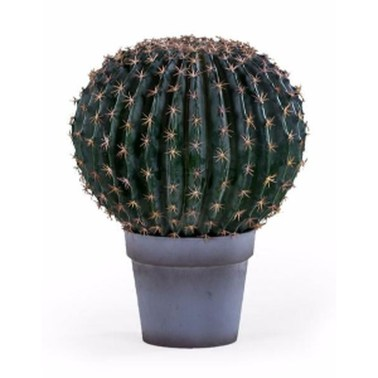 Cool Small Cactus Ideas For Interior Home Design07