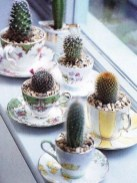 Cool Small Cactus Ideas For Interior Home Design14