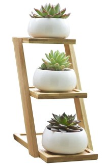 Cool Small Cactus Ideas For Interior Home Design26