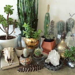 Cool Small Cactus Ideas For Interior Home Design41