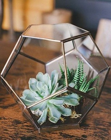 Cool Small Cactus Ideas For Interior Home Design48