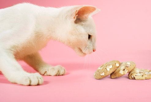 Cats can't detect sweetness