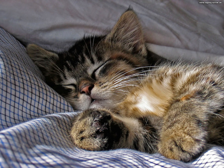 Cats will spend about 70% of their lives sleeping