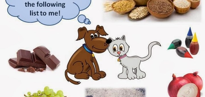 Top 8 Foods You Should Not Feed Your Cat or Dog