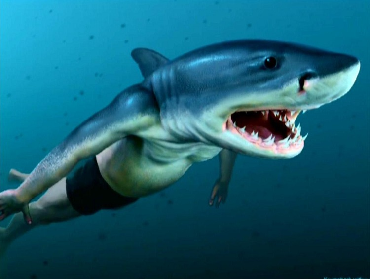 Humans and sharks have mutual ancestor and similar genes