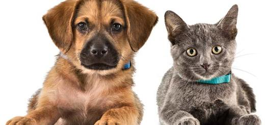 Top 9 Things You Can Learn From Your Pets