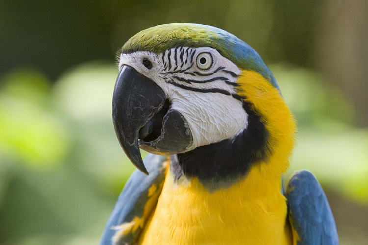 """Woman got divorced after her parrot started saying words like """"Divorce"""" and """"Be patient"""""""