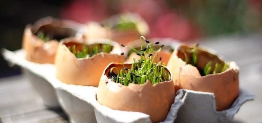 Use the egg shell to start a seedling