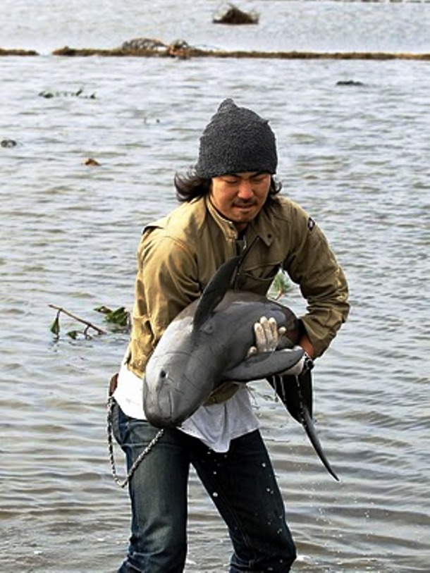 Japanese man rescues a baby porpoise