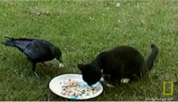 Kitty and crow