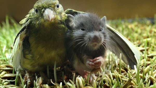 You Wouldn't Believe These Animals are Best Friends