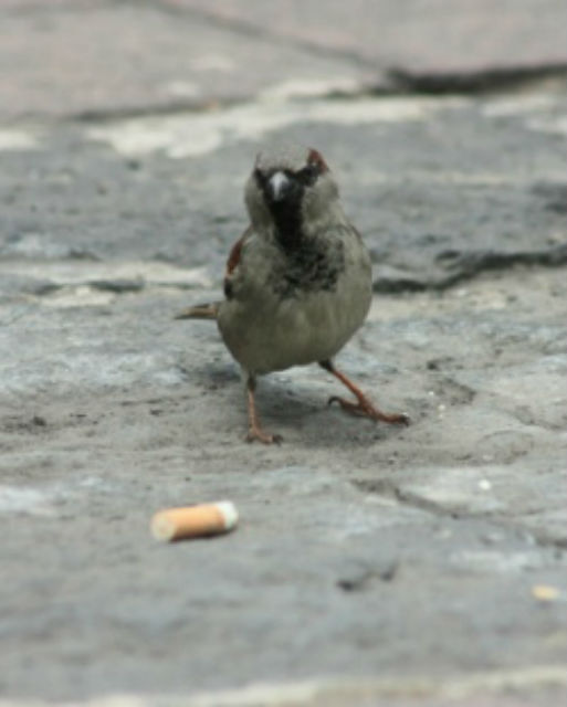 Bird Set a House on Fire with a Cigarette