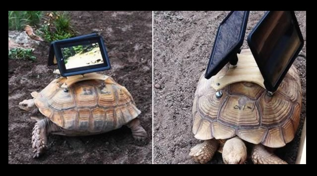 iPad Turtles