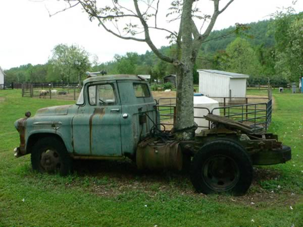 The tree that found its way through an abandoned truck