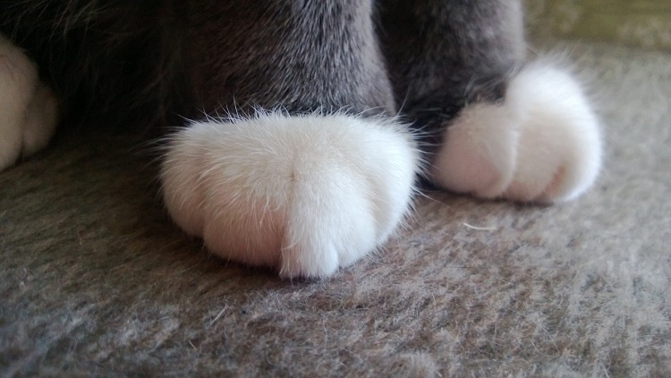 Declawing is not a regular nail trimming