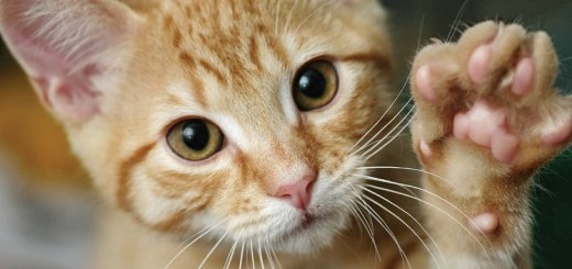 Declawing your cat is a bad Idea – Here's why