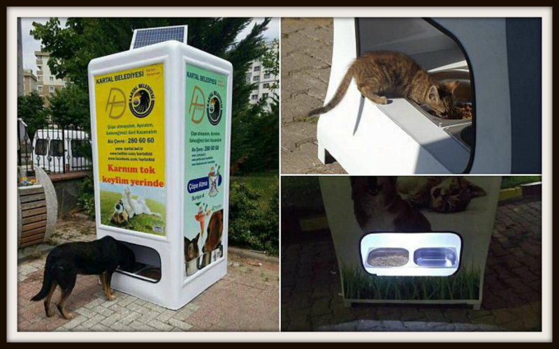 Istanbul has a vending machine that releases food and water for the city's stray dogs in exchange for recycled plastic bottles.
