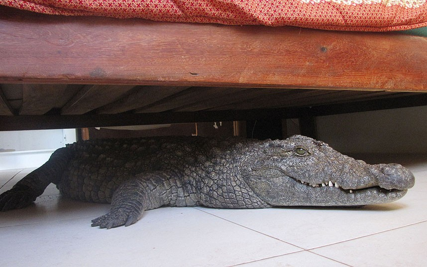 Man finds a crocodile under his bed