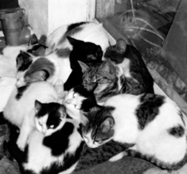 The little Argentinean boy saved by cats