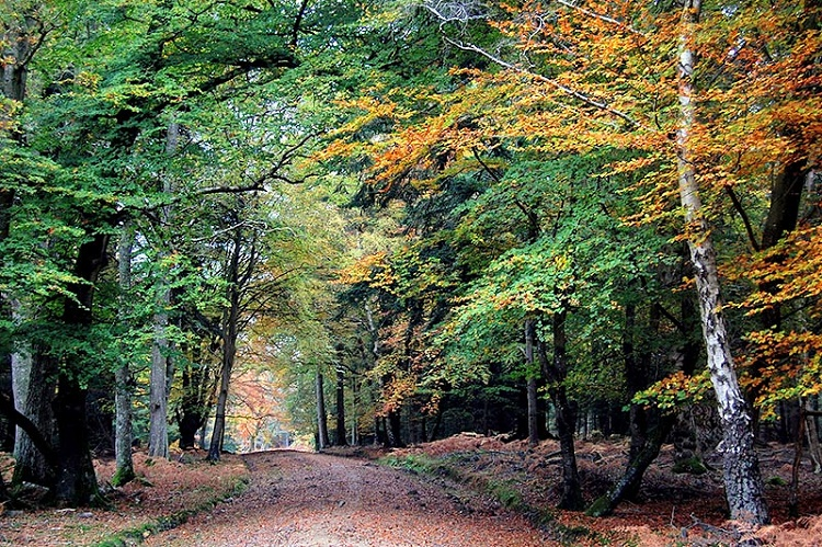 New Forest (England)