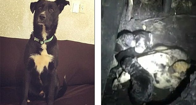 This dog does something unbelievable - saves lives of 10 new born puppies