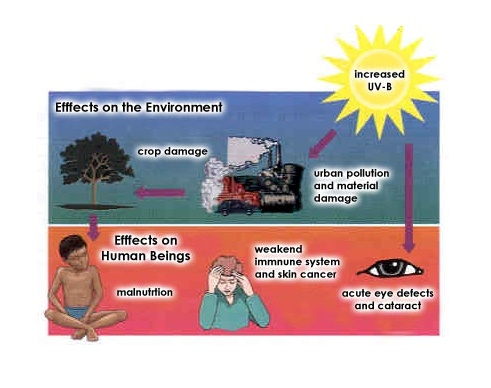 Causes and repercussions of ozone depletion