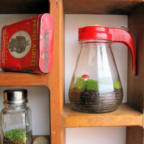 Syrup and Salt Shaker Terrariums
