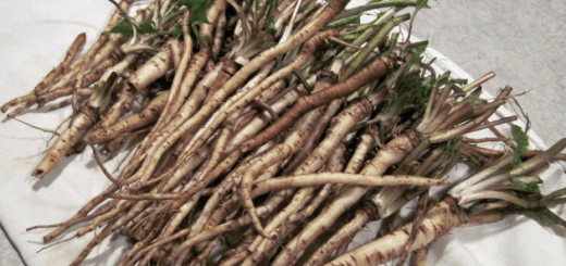 Use this herb for cancer cells and see the effects