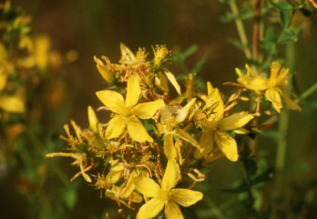 Try out the St. John's Wort cream!
