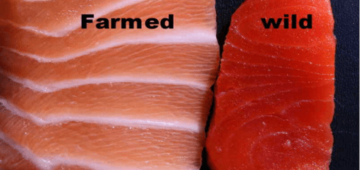 Wild caught fish or farmed fish - which one is better for your health