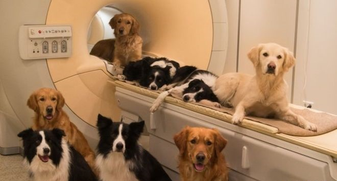 Brain Scans on dogs at Emory University, Atlanta