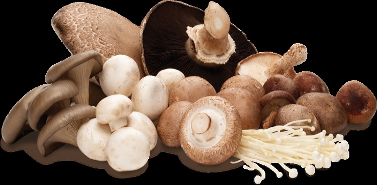Mushrooms are more than just a tasty food