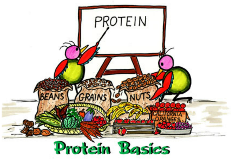 Say 'YES' to protein