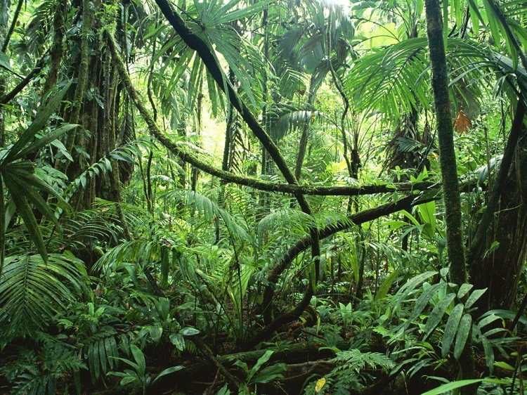 Amazon rain forest produces 20% of the earth's oxygen