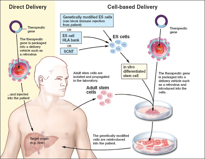 How is the stem cell treatment done?
