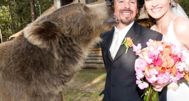 Saving an abandoned grizzly Bear turns into an emotional saga of love and friendship!