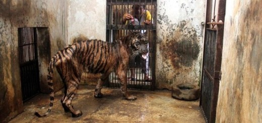 Surabaya Zoo in Java is called the Indonesian Zoo of death Find out why!!