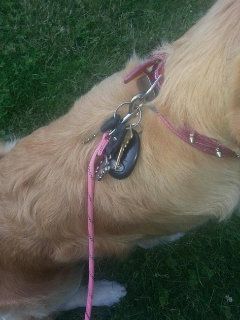 Multiple uses of dog collar