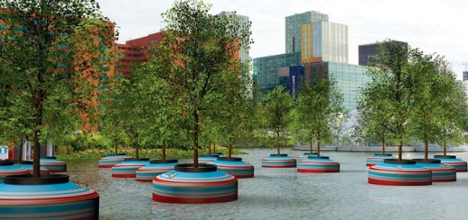 The Incredible floating forest of rotterdam has trees growing on water