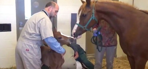 This horse was about to give birth, but what happened next left the doctors surprised