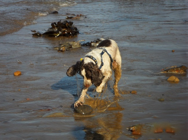 Dog searching food on the beach