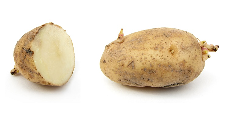 Russet potato to treat boil
