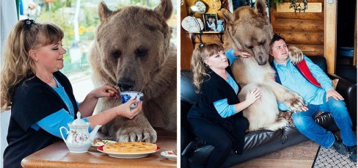 Watch This amazing 300 pound bear who loves to cuddle up and does household chores