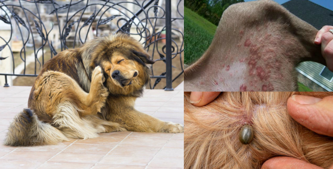 Infallible tips to Keep your Pets away from Fleas and Ticks