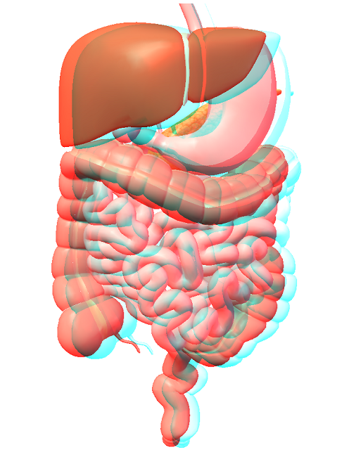 digestive system of the body