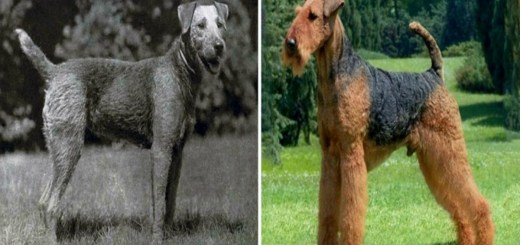 How Evolution Has Changed Popular Dog Breeds Over The Last 100 Years