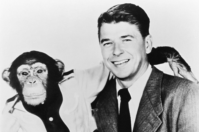 Ronald Reagan's Stand-Up Routine with Chimpanzees