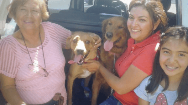 Boby finds a forever Home